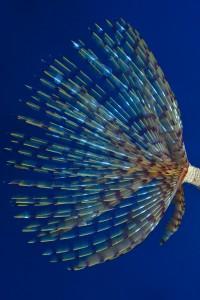 OCEANA/ Carlos Minguell © LIFE BaĦAR for N2K